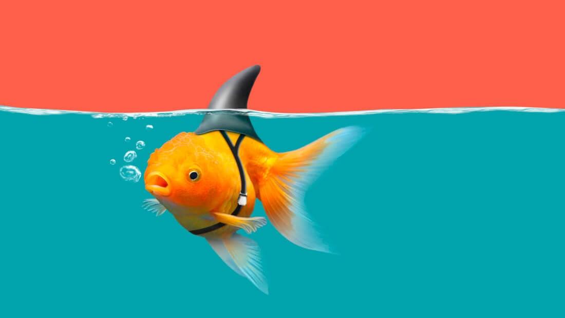 рыбка аквариум акула