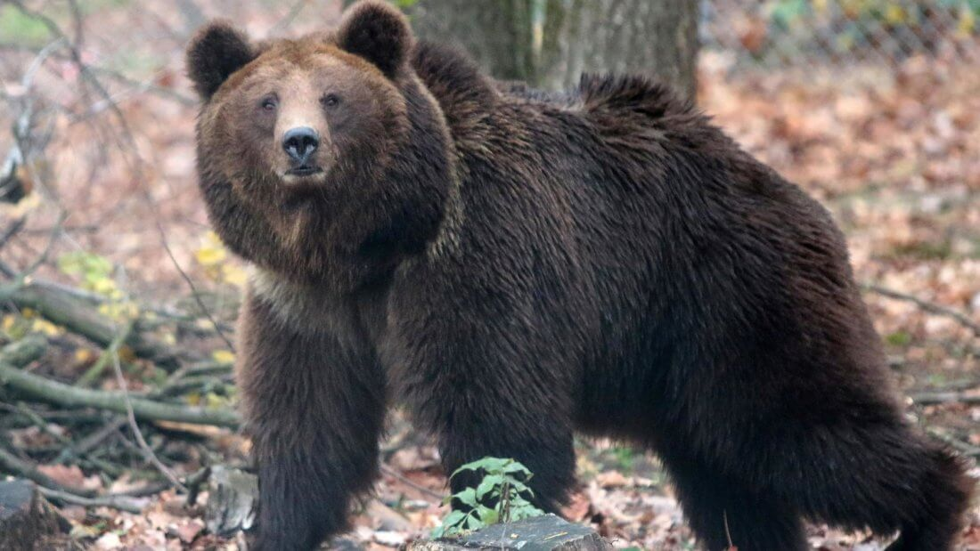 медведь рынок криптовалюты