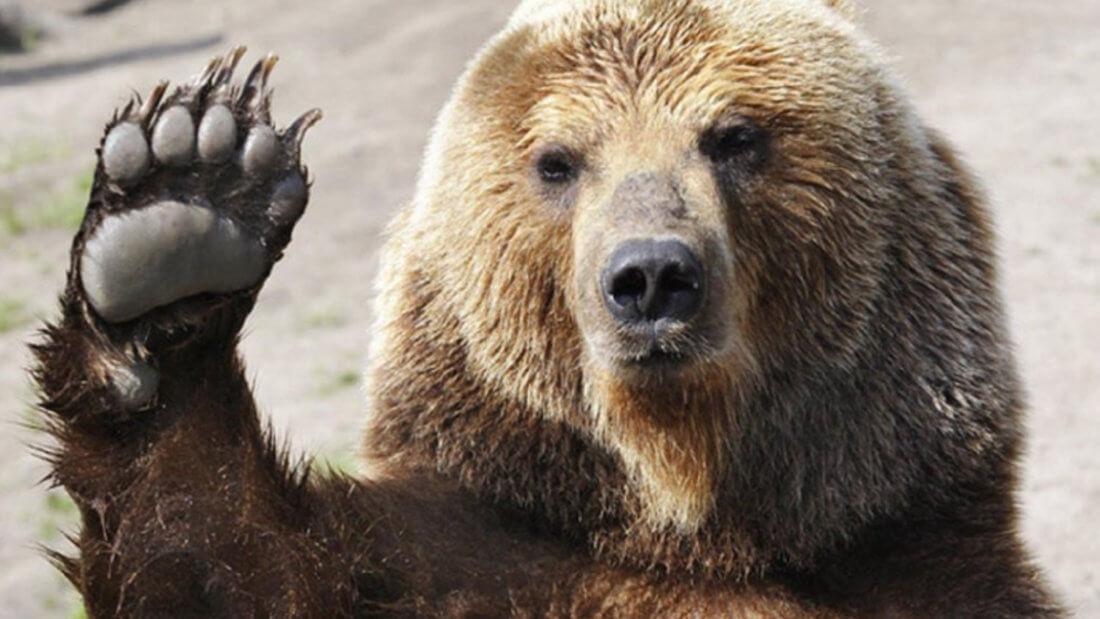 медведь Биткоин блокчейн