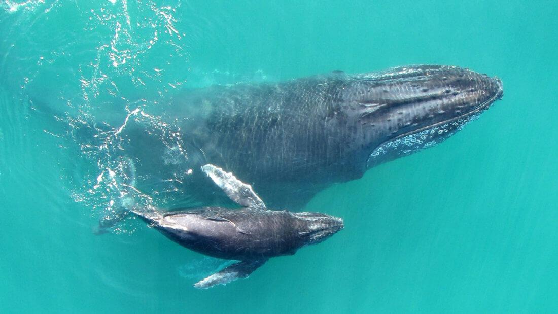 киты животные океан